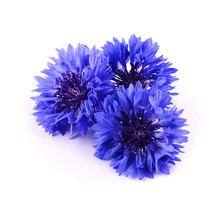 Blue Cornflower Herb Isolated ...