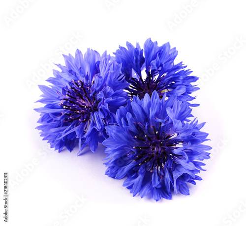 fototapeta na ścianę Blue cornflower herb isolated on white background