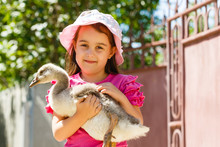 Little Girl And Canada Goose I...