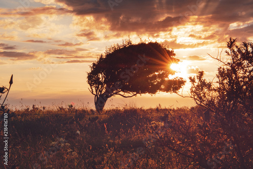 Deurstickers Australië Beautiful landscape nature view of a single tree with lens flare in the morning glow sun light. Rubjerg Knude Lighthouse, Lønstrup in North Jutland in Denmark, Skagerrak, North Sea