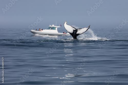 Fototapeta premium Obserwacja wielorybów u wybrzeży Cape Cod