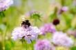 Blumenwiese mit Hummel - Sommer Wiese