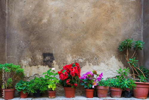 Fotografía  Flowers on clay vases lay in front of rough, grunge and bumpy concrete wall