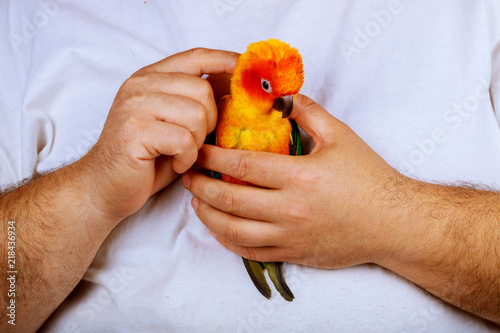 Sitting on a palm of hand man is playing with parrot