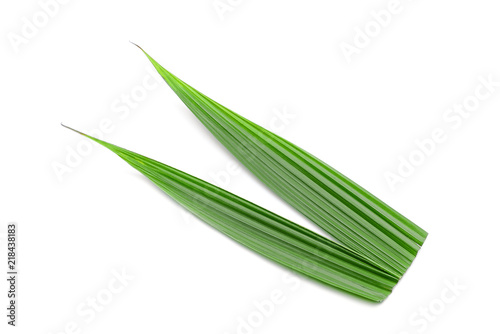 Fotografia green coconut leaf isolated on white background