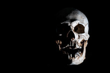 Human Skeleton Skull Head Isol...