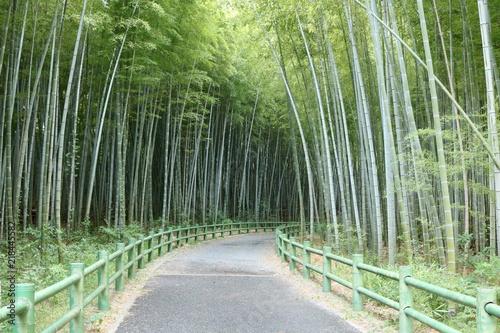 愛知 緑地公園 夏 日中 竹 竹林 小径 ハイキングコース
