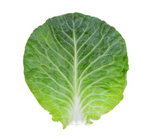 Fresh Green Pointed Cabbage Leaf Isolated On White Background,top View