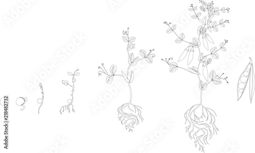 Free Planting Coloring Pages, Download Free Clip Art, Free Clip ... | 302x500