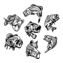 Illustration For Fishing Logo....