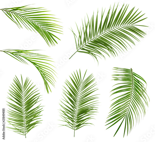 Photo Set with tropical Sago palm leaves on white background