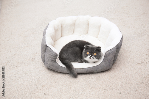 Keuken foto achterwand Kat Cute cat resting on pet bed at home