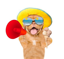 Funny Dog In Summer Hat And With Sunglasses Holds Ice Cream And Megaphone. Isolated On White Background