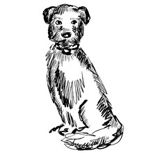 Sitting Dog In Collar. Portrait Of A Terrier, Purebred Dog. Animal Illustration With Cute Pet For Design, Covers, Prints, Posters, Surface , T Shirt, Notebooks, Scrapbooking