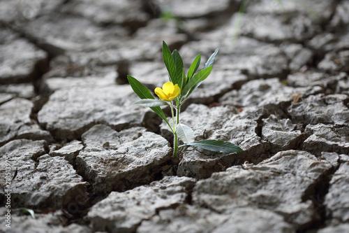 Платно Blume kämpft sich durch trockene Erde