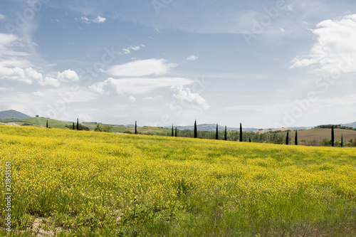 Italian landscape with green fields in spring, holidays in Italy in Umbria and Tuscany. Travel drive in the Tuscany countryside with soft green hills and blue skies. Calm and relax holidays in Italy