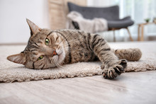 Cute Cat Resting On Carpet At Home