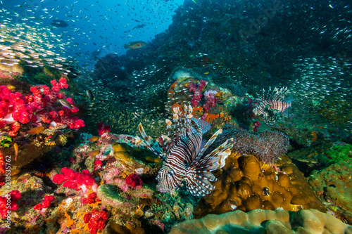 Poster Coral reefs Colorful Lionfish surrounded by tropical fish on a coral reef in the Andaman Sea