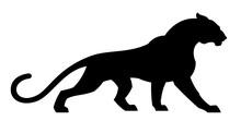 Black Cougar On A White Backgr...