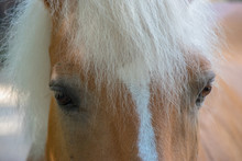 Close Up Of A Horse's Eyes