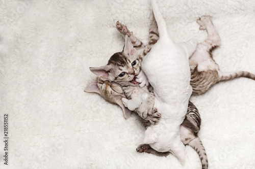 Photo  Fighting Kittens