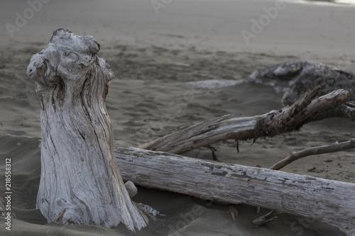 Fotografie, Obraz  Gold Beach Oregon