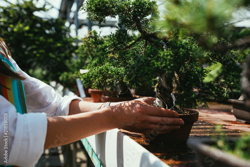 Cadres-photo bureau Bonsai Bonsai greenhouse center. rows with small trees, woman working and taking care of the plants