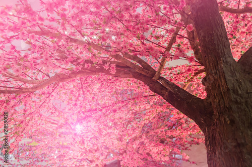 Photo  Background of blooming pink Cherry Blossom Sakura trees and sun flare