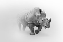 Rhino Africa Wildlife Animal A...