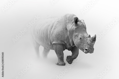 Fotografia, Obraz  Rhino africa wildlife animal art collection grayscale white edition