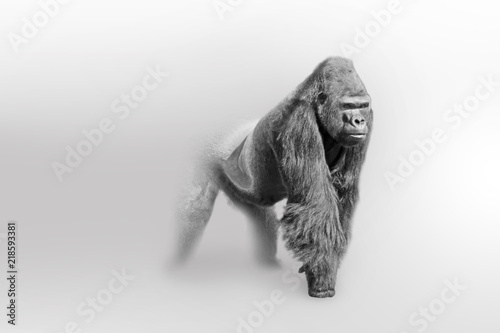 Gorilla africa wildlife animal art collection grayscale white edition