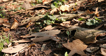 Tree Bark And Dead Leaves - Au...