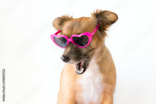 Foto Mongrel brown dog wearing heart shaped sunglasses isolated over a white backgrou