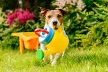 Dog With Children Toy Watering Can Irrigating Backyard Garden