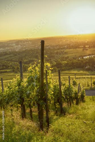 Fotobehang Toscane FellbacherWeinberge4