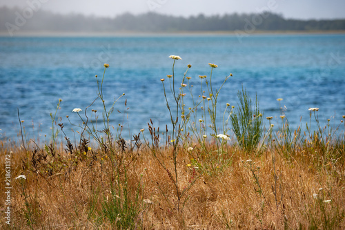 Photo  roadside wildflowers overlooking a cove in the pacific ocean along the northern