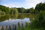 Jezioro w lesie