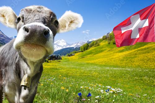 Photo Stands Cow Kuh in der Schweiz