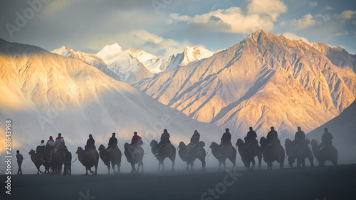 Poster Taupe Caravan of people riding on camels in dusty Nubra valley