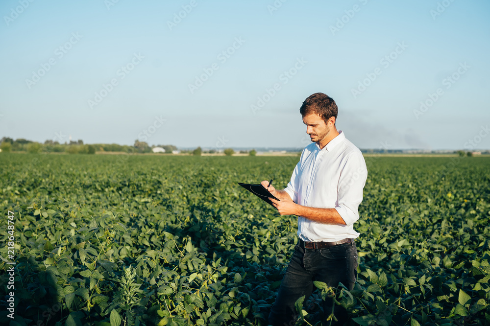 Obraz Yong handsome agronomist holds tablet touch pad computer in the corn field and examining crops before harvesting. Agribusiness concept. agricultural engineer standing in a corn field with a tablet fototapeta, plakat