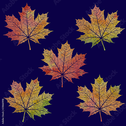 Set Of Watercolor Maple Leaves Paint Texture Vector