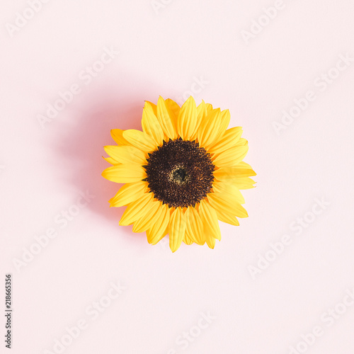 Autumn composition. Sunflower on pastel pink background. Autumn, fall concept. Flat lay, top view, square