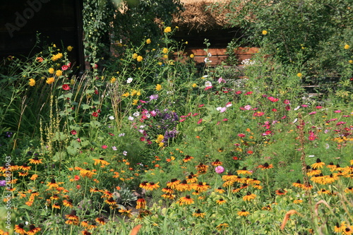 Photo  Garden of flowers