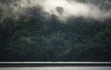 The Landscape View Of Tropical Rain Forest, Nature Scene