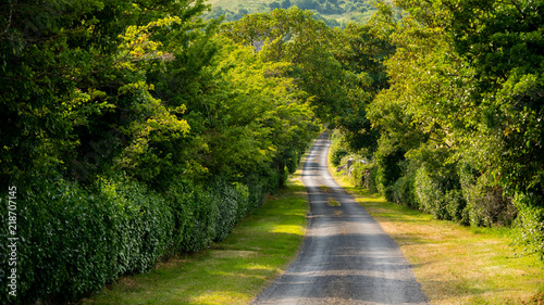 single lane road in Ireland with green trees framing the view
