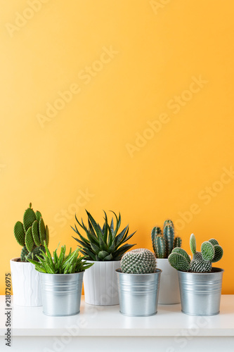 Keuken foto achterwand Cactus Collection of various cactus and succulent plants in different pots. Potted cactus house plants on white shelf against pastel mustard colored wall.