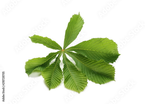 Horse-chestnut (Aesculus hippocastanum, Conker tree) leaves isolated on white background