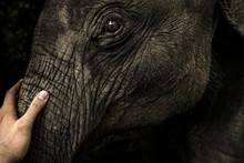 Closeup Of A Man's Hand Stroki...
