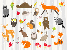 Cute Wild Animals Cartoon Set