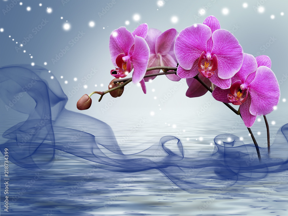 Fototapety, obrazy: Orchid on a blue background